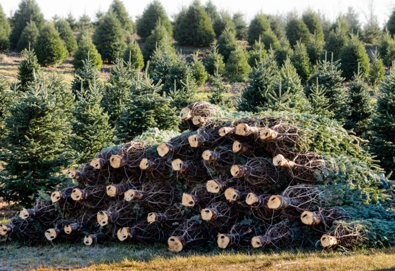 In the Christmas Tree business, you plant profits all year long.