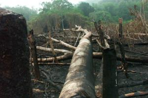 Indonesia Sets A Carbon Time-Bomb
