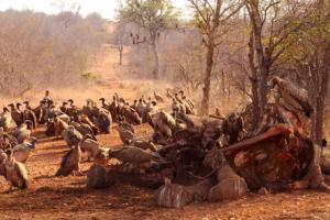 The Economics Of The Illegal Wildlife Trade