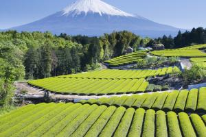 Local elections in Japan present an opportunity for the Agriculture Co-op.