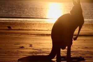Australia's Crossroads: Between East And West