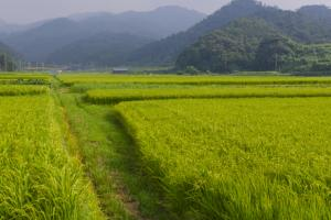 Will any of the JIP's agricultural reforms leak into the LDP