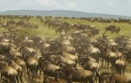 Serengeti Highway Pits Economy vs Eco-System